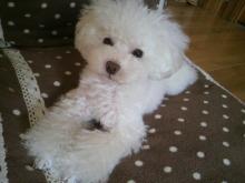 愛犬鈴ちゃん~トイプードル☆ライフスタイル~-2012102209280001.jpg