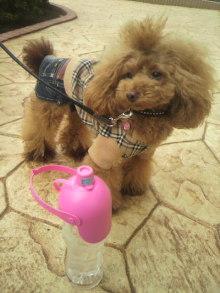 愛犬鈴ちゃん~トイプードル☆ライフスタイル~-2012102712320000.jpg