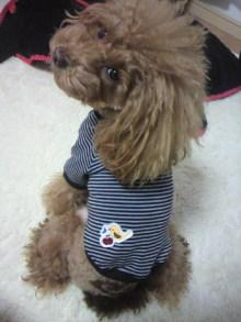 愛犬鈴ちゃん~トイプードル☆ライフスタイル~-2012111708160000.jpg