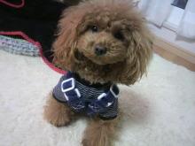 愛犬鈴ちゃん~トイプードル☆ライフスタイル~-2012111708230000.jpg