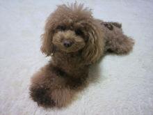 愛犬鈴ちゃん~トイプードル☆ライフスタイル~-2012111721050001.jpg