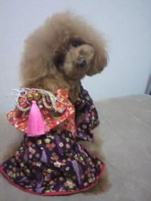 愛犬鈴ちゃん~トイプードル☆ライフスタイル~-2012111722420000.jpg