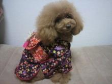 愛犬鈴ちゃん~トイプードル☆ライフスタイル~-2012111722430001.jpg