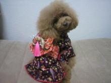 愛犬鈴ちゃん~トイプードル☆ライフスタイル~-2012111722430000.jpg