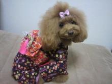 愛犬鈴ちゃん~トイプードル☆ライフスタイル~-2012111722500001.jpg