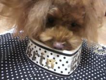 愛犬鈴ちゃん~トイプードル☆ライフスタイル~-2012111723300002.jpg