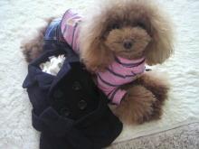 愛犬鈴ちゃん~トイプードル☆ライフスタイル~-2012111810420002.jpg