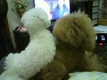 愛犬鈴ちゃん~トイプードル☆ライフスタイル~-2012111821110002.jpg