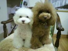 愛犬鈴ちゃん~トイプードル☆ライフスタイル~-2012111818420001.jpg