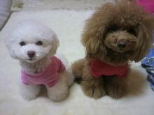 愛犬鈴ちゃん~トイプードル☆ライフスタイル~-2012111920240000.jpg