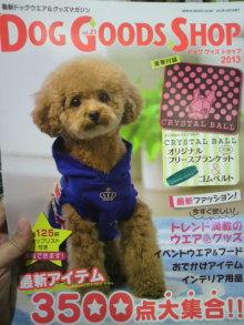 愛犬鈴ちゃん~トイプードル☆ライフスタイル~-2012111920150000.jpg