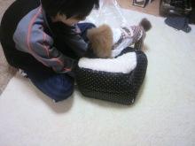 愛犬鈴ちゃん~トイプードル☆ライフスタイル~-2012112221500000.jpg