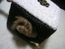 愛犬鈴ちゃん~トイプードル☆ライフスタイル~-2012112221510003.jpg