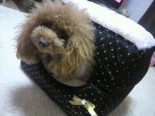 愛犬鈴ちゃん~トイプードル☆ライフスタイル~-2012112221520002.jpg