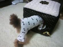 愛犬鈴ちゃん~トイプードル☆ライフスタイル~-2012112308340003.jpg