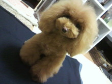 愛犬鈴ちゃん~トイプードル☆ライフスタイル~-2012112319040000.jpg