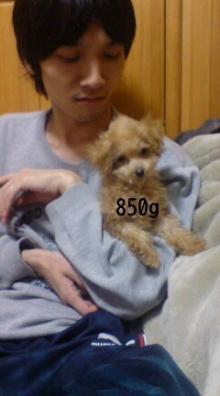 愛犬鈴ちゃん~トイプードル☆ライフスタイル~-P1000081.jpg