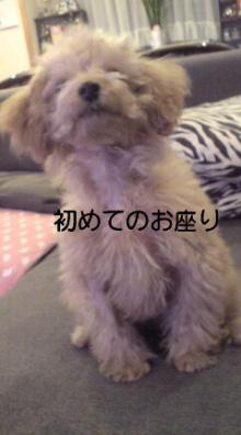 愛犬鈴ちゃん~トイプードル☆ライフスタイル~-P1000085.jpg