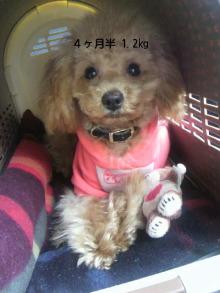 愛犬鈴ちゃん~トイプードル☆ライフスタイル~-P1002092.jpg