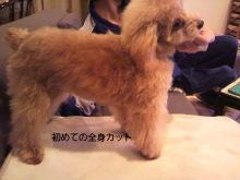 愛犬鈴ちゃん~トイプードル☆ライフスタイル~-P1000240.jpg