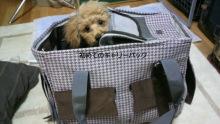 愛犬鈴ちゃん~トイプードル☆ライフスタイル~-P1002250.jpg