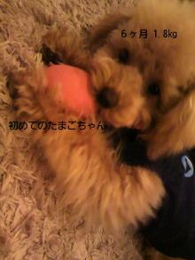 愛犬鈴ちゃん~トイプードル☆ライフスタイル~-P1000263.jpg