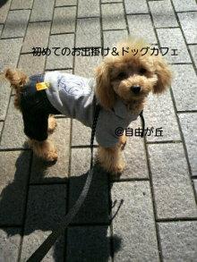 愛犬鈴ちゃん~トイプードル☆ライフスタイル~-P1000281.jpg