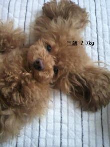 愛犬鈴ちゃん~トイプードル☆ライフスタイル~-P1000355.jpg
