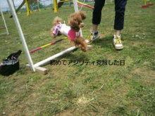 愛犬鈴ちゃん~トイプードル☆ライフスタイル~-P1000328.jpg