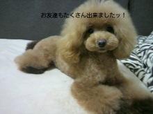 愛犬鈴ちゃん~トイプードル☆ライフスタイル~-2012092411280000.jpg
