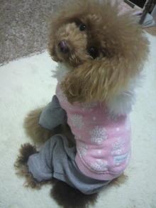 愛犬鈴ちゃん~トイプードル☆ライフスタイル~-2012112418520000.jpg