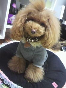 愛犬鈴ちゃん~トイプードル☆ライフスタイル~-2012112810170002.jpg