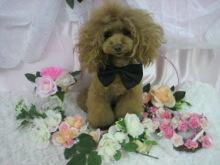 愛犬鈴ちゃん~トイプードル☆ライフスタイル~-2012112815020000.jpg