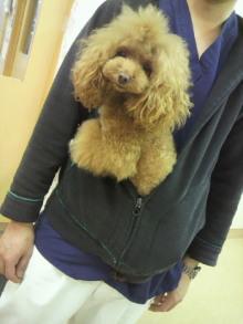 愛犬鈴ちゃん~トイプードル☆ライフスタイル~-2012112815310000.jpg