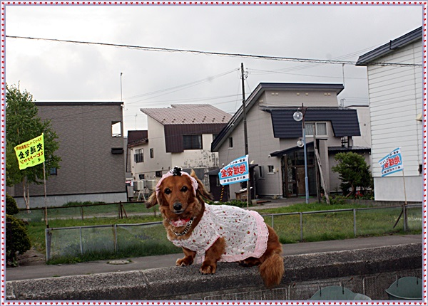 IMG_8344.jpg