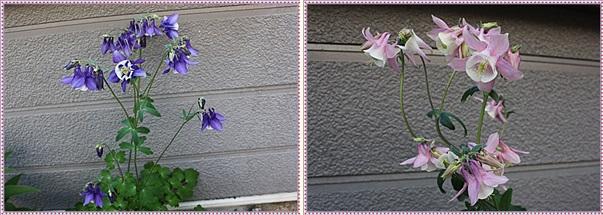 IMG_9163-tile.jpg