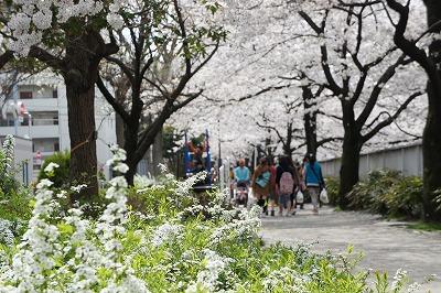 20140403桜