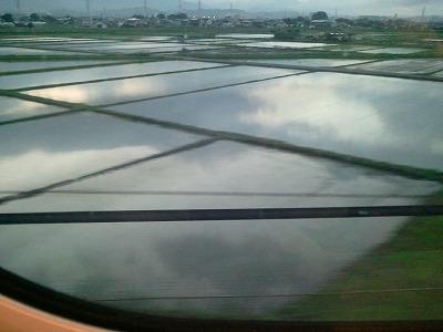 2014梅雨の水田