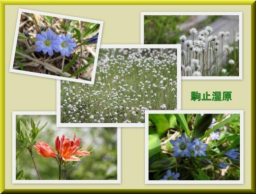 2014,6,15駒止湿原-2