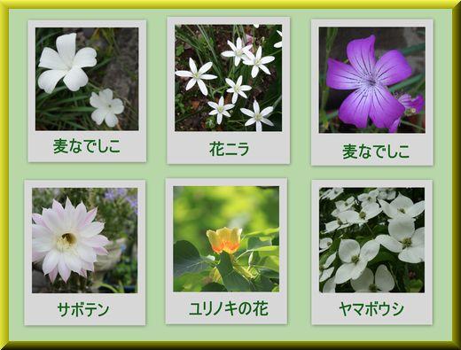 花のいろいろ6