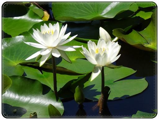 水元公園の花1