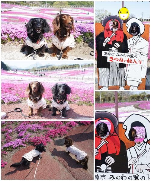 みさと芝桜公園2