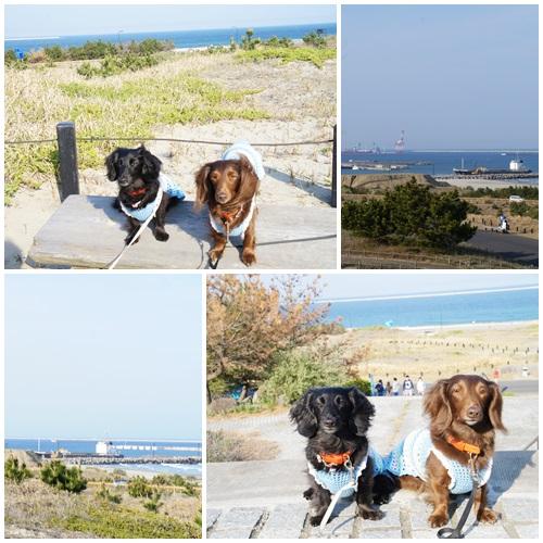 海浜公園5