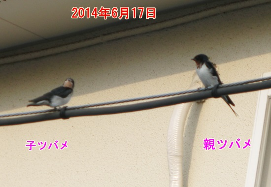 CIMG1874.jpg