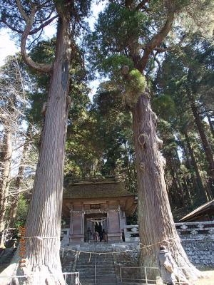 H260312杉