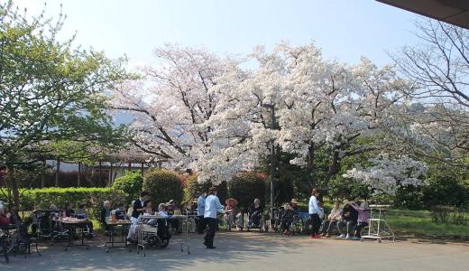 H260327桜