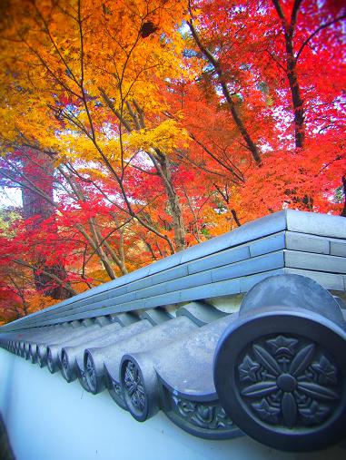2014.3.13 2013紅葉 京都.奈良 2