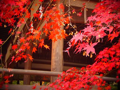 2014.3.13 2013紅葉 京都.奈良 1