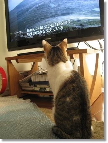 TV大好き5