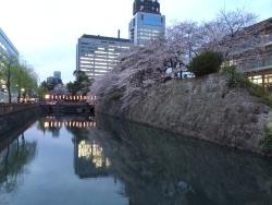 20140331sakura.jpg